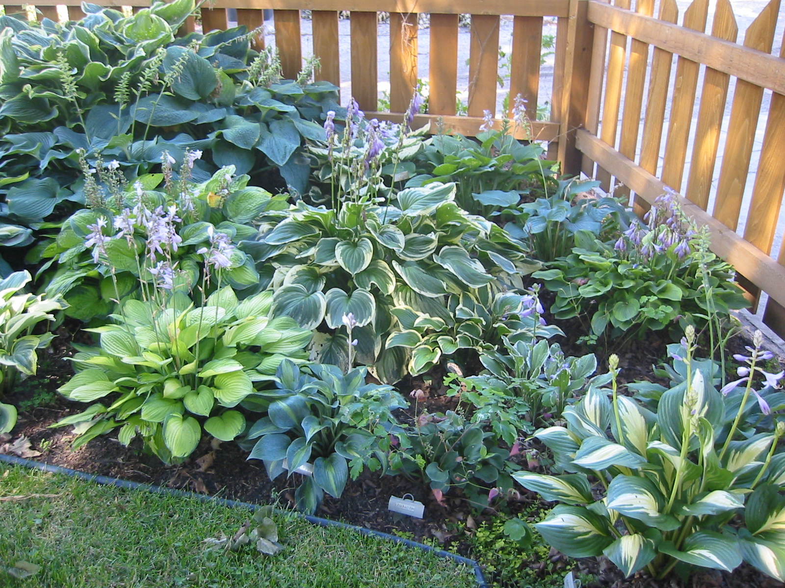 View topic plants for a very shady courtyard home renovation building forum - House plants that like shade ...